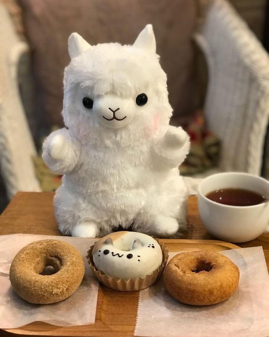 Instagram post of white Amuse alpaca sitting in front of donuts.